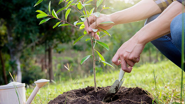 Image of planting a tree sapling - close up of hands with a spade digging in the dirt